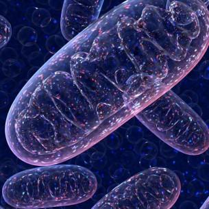 AIE™ Mitochondria Probes